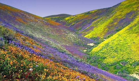Sikkim-valley-of-flowers