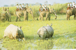 Kaziranga-Elephant-safari